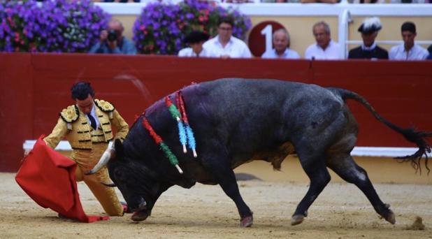 El torero peruano reaparecerá el próximo sábado tras la cornada de Bayona