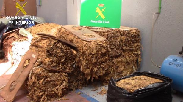 Hojas de tabaco intervenidas por la Guardia Civil en una nave de Ontígola