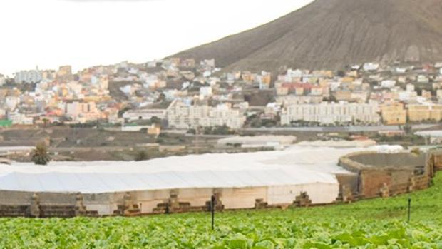 El detenido era profesor de clases particulares en Gáldar, Gran Canaria