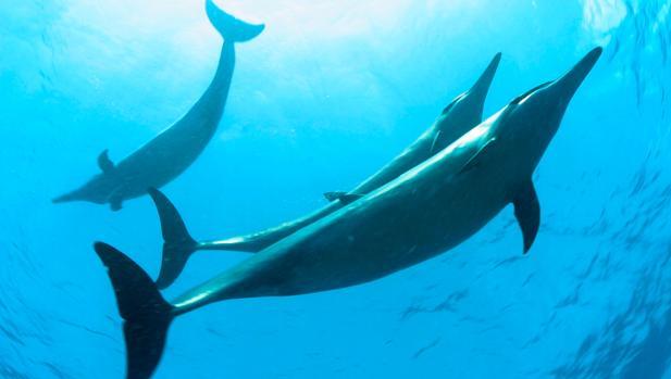 Barack Obama creará la mayor área marina protegida del mundo