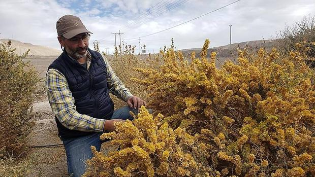Un pulmón verde prospera en el desierto más árido del planeta
