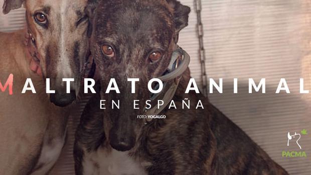 Pacma denuncia el maltrato animal.