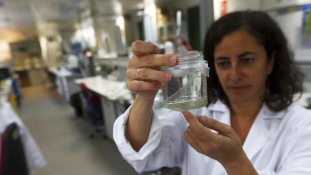 La investigadora Laura Prieto, en los laboratorios del CSIC en el Campus de Puerto Real.