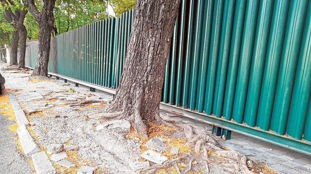 Estado de la acera en la avenida de Alfredo Kraus