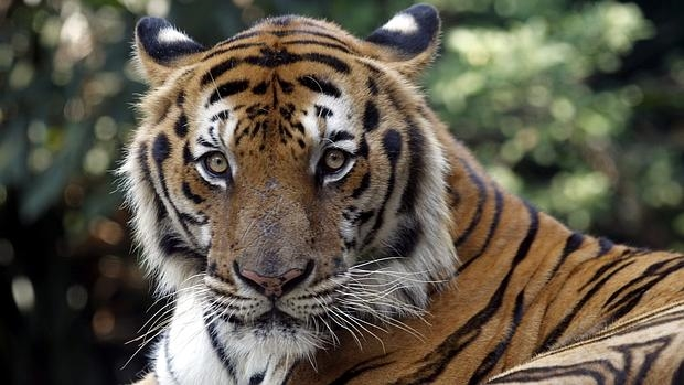 Su población era de cerca de 100.000 animales hace un siglo y de unos 3.200 en 2010