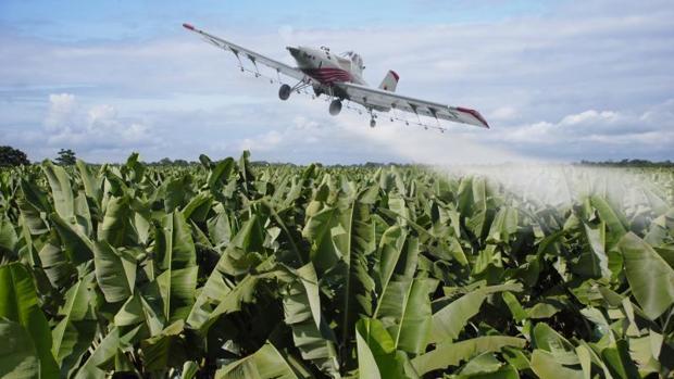 Avión esparciendo glifosato, el herbicida mas usado en todo el planeta