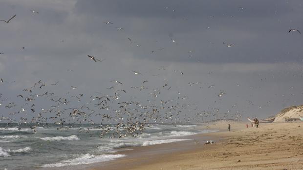 La playa de Mira, de unos tres kilómetros y medio situada en la zona central del Atlántico portugués