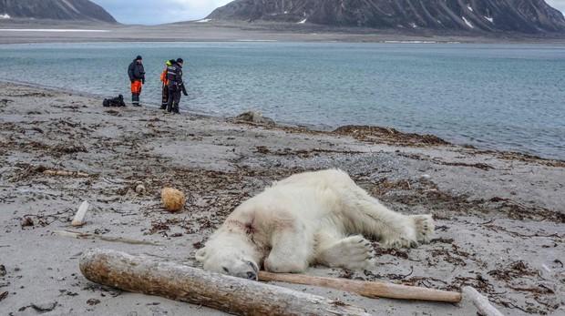 El oso polar asesinado por el guardia